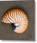 Bellybutton Nautilus - Nautilus Macromphalus Metal Print