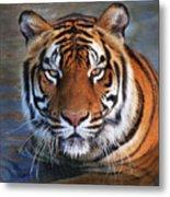 Bengal Tiger Laying In Water Metal Print