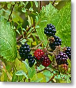 Berries In Vicente Perez Rosales National Park Near Puerto Montt-chile  Metal Print