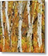 Birch Trees In Autumn Metal Print