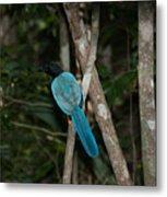 Birds From Coba Metal Print