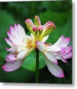 Blossoming Lotus Flower Closeup Metal Print