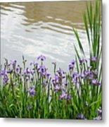 Blue Daffodils Metal Print