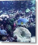 Blue Fish Metal Print