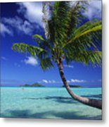 Bora Bora, Palm Tree Metal Print
