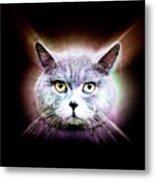 British Shorthair Cat Metal Print