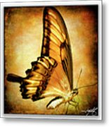 Broad Banded Swallowtail Metal Print