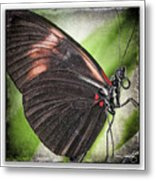 Brush-footed Butterfly Metal Print