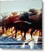 Bull Run Metal Print