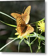 2 Butter Flies Metal Print