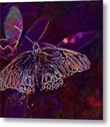 Butterfly Insect Wing Wildlife Bug  Metal Print