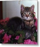 2 Cats In The Flowers Metal Print