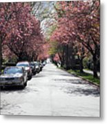 Cherry Blossom In Vancouver City Metal Print
