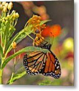 Clinging Butterfly Metal Print