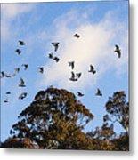 Cockatoos - Canberra - Australia Metal Print