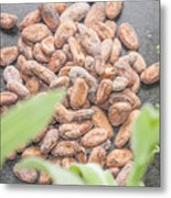 Cocoa Beans Metal Print