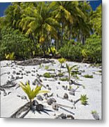 Coconut Palms On A Polynesian Beach Metal Print