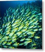 Coral Reef Scene Metal Print