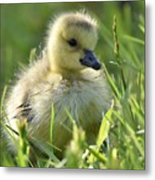 Cute Baby Goose Metal Print