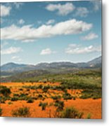 Daisies Blooming In Namaqualand 2 Metal Print