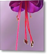 Dance Of The Fuschia Metal Print