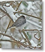 Dark-eyed Junco - Snowbird Metal Print