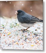 Dark Eyed Junco Metal Print