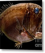 Deep Sea Fangtooth Metal Print