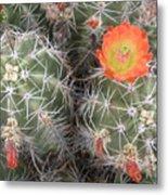 Desert Bloom Metal Print