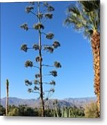 Desert Willow Golf Resort Metal Print
