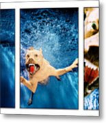 Dog Underwater Series Metal Print