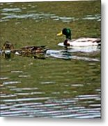 2 Ducks Metal Print