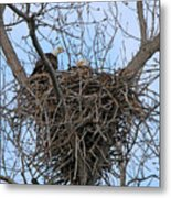 2 Eagles On Nest  3172b  Metal Print