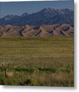 Eight Point Buck In The Grass Lands Of The Great Sand Dunes Metal Print