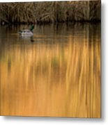 Evening By The Pond Metal Print