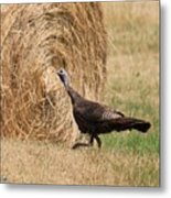 Female Eastern Wild Turkey Metal Print
