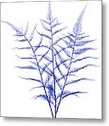 Fern, X-ray Metal Print