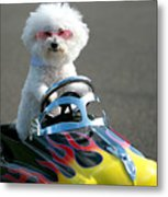 Fifi Goes For A Ride Metal Print