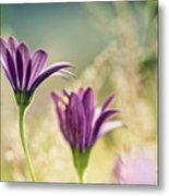 Flower On Summer Meadow Metal Print
