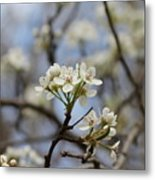 Flowering Trees Metal Print