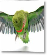 Flying Parrot  Metal Print