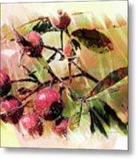 Fruit Of The Wild Rose Metal Print