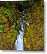 Streaming In The Olympic Rainforest Metal Print