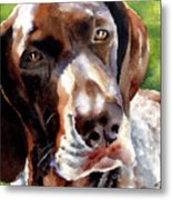 German Short Haired Pointer Metal Print