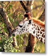 Giraffe Metal Print by Sebastian Musial