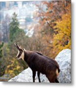 Goat In The Austrian Alps Metal Print