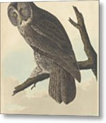Great Cinereous Owl Metal Print