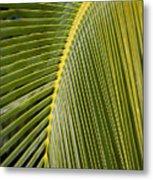 Green Palm Leaf Metal Print