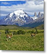 Guanacos In Torres Del Paine Metal Print