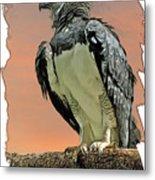 Harpy Eagle Metal Print